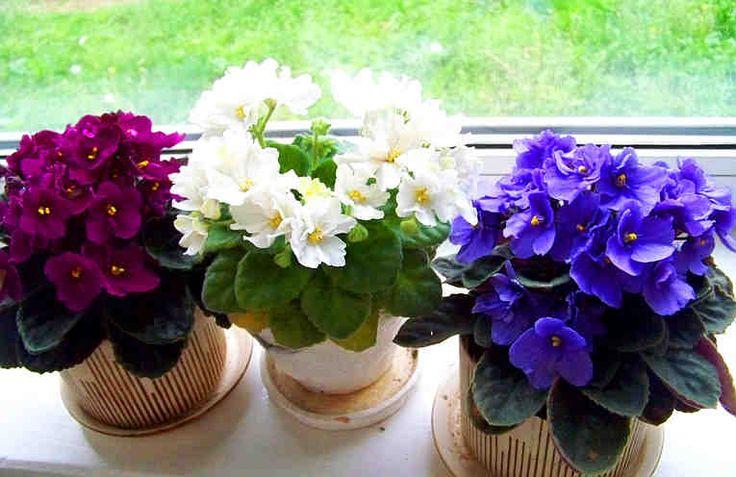 Комнатные растения украсят любой интерьер. Без них наши жилища кажутся совсем не такими уютными и милыми. Но только в одном случае, если комнатные растения здоровы и хорошо себя чувствуют: тогда они выглядят прекрасно и радуют глаз.    Но если ваше комнатное растение стало вялым, если у него пон