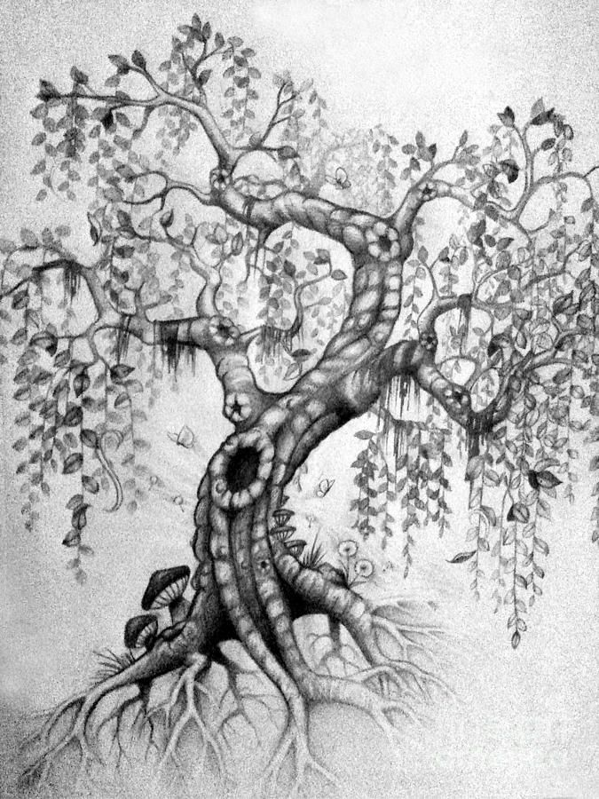 The Willow Drawing  - The Willow Fine Art Print