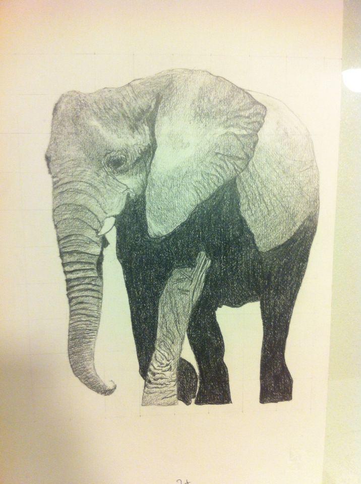 Disegno a matita Elefante chiaro scuro