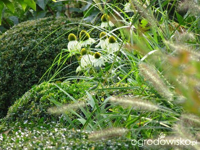 Wizytówka - Kiedyś będzie tu....Madżenie Ogrodnika - Forum ogrodnicze - Ogrodowisko