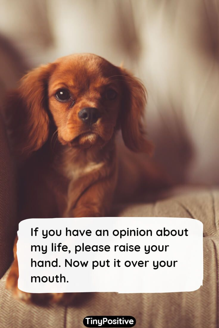 76 Funny Quotes To Make You Laugh Short Funny Sayings And Quotations Tiny Positive Jokes About Life Short Funny Quotes Sarcastic Jokes