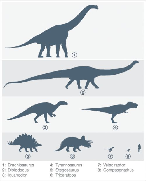 The size of dinosaurs is one of their most interesting aspects which will surely capture your students attention and engage their imagination.  This image shows the shadows of eight dinosaurs and a human. Invite your students to tell which ones were the tallest and the longest, estimate how big they were compared to a human. #dinosaurs #size #height #length