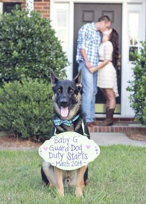 10 Great Pregnancy Announcement Pictures. It would be hilarious if we had our puppy babies do this!!