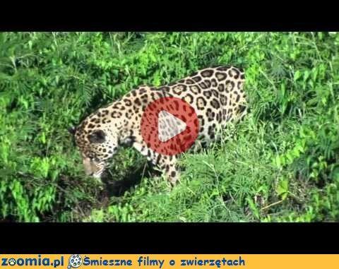 Smaczne spaghetti « Inne zwierzęta « Śmieszne filmy o zwierzętach - śmieszne koty, śmieszne psy. Zoomia.pl :: Zoomia pl
