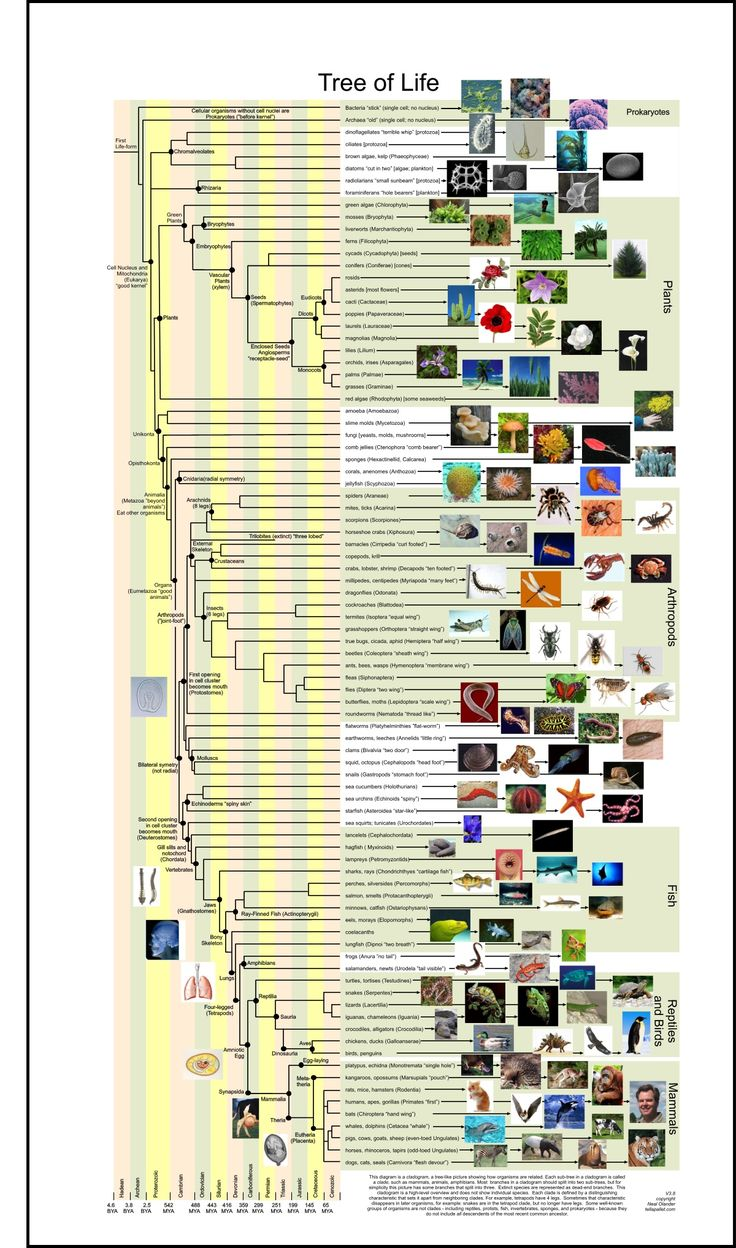 """Well it's called a """"tree of life"""", but is has one branch for Bacteria and one for Archea. Nice photos though."""