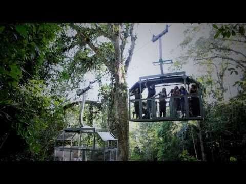 "Veragua Rainforest Research & Adventure Park is surrounded by 100% Rainforest. The park is a buffer zone for La Amistad International Park (""Friendship International Park""), which is shared by Costa Rica and Panamá."