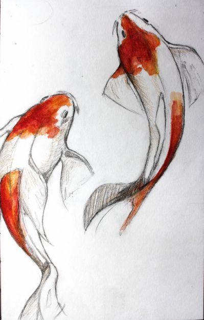 fish koi drawing drawings