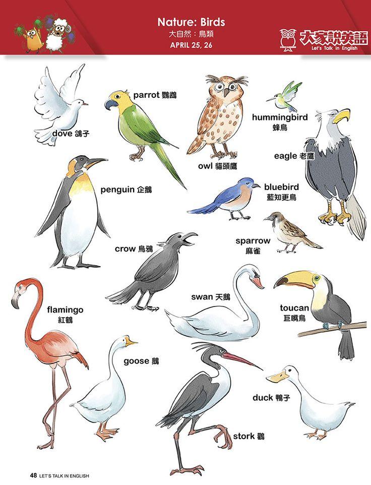 【Visual English】Nature: Birds