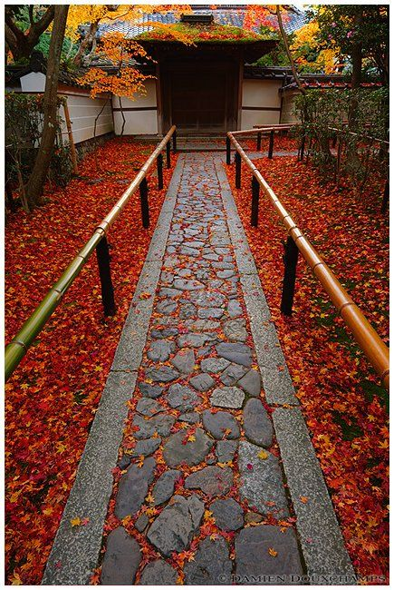 Fall in entrance to Koto-in, sub-temple of Daitoku-ji, Kyoto