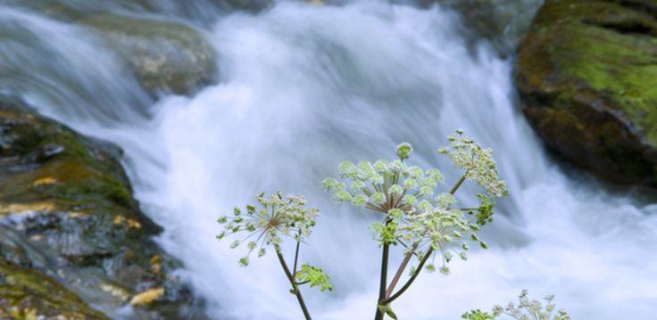 #Natur #tiroleroberland