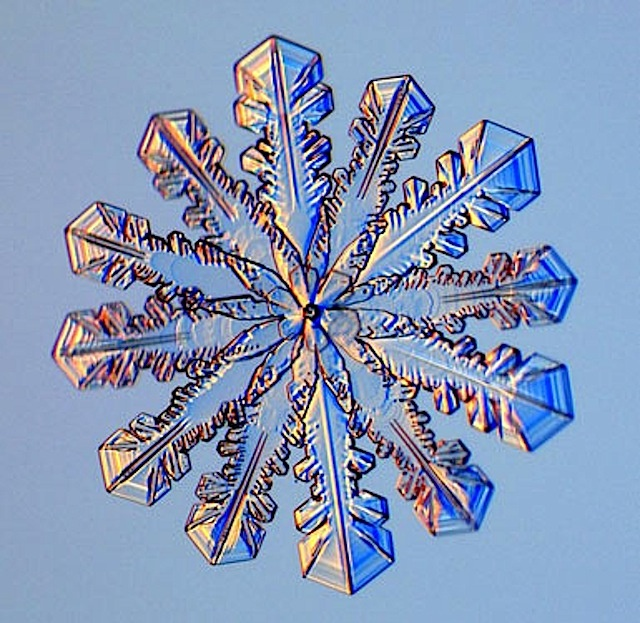 These snowflake photos were taken by Kenneth Libbrecht of CalTech,  by using a special  snowflake photo microscope.