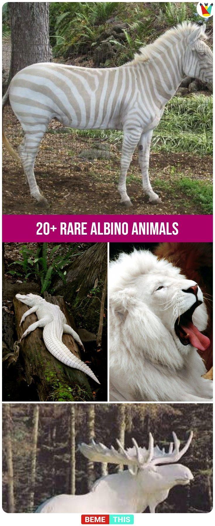 20+ seltene Albinotiere, die Sie wahrscheinlich noch nie zuvor gesehen haben #abino #albinoanimal …   – cat & dog