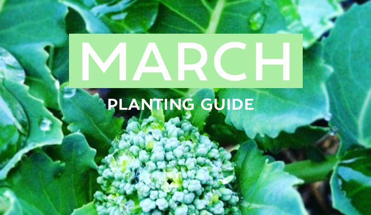 Your March Edible Planting Guide - Australia Wide! It's the beautiful start of Autumn & there's so much to grow this month! From Broc to Garlic to Spinach + a HEAP more!