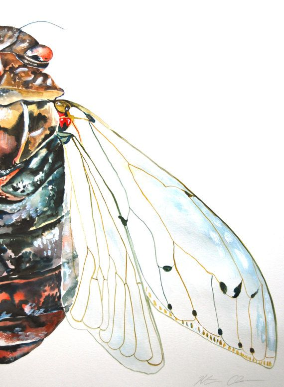 Watercolor Painting Cicada Original Painting 18x24 by WoodPigeon, $150.00