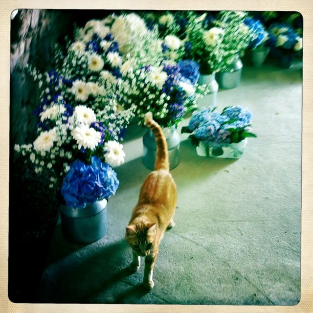 Buster inspects the flowers!