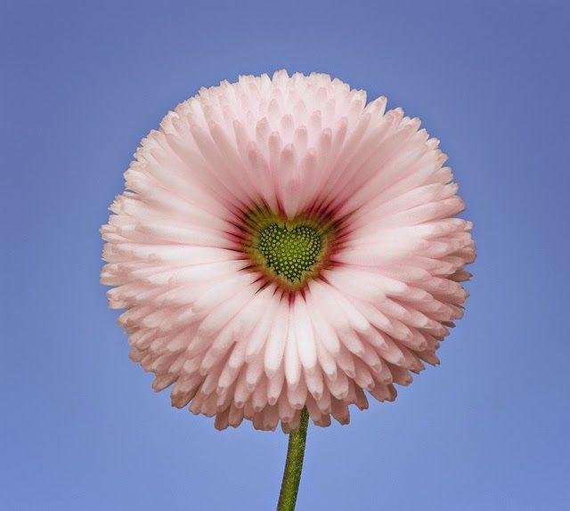 ஜ۩۞۩ஜ Azulestrellla ஜ۩۞۩ஜ: ► Flores Exóticas de todo el Mundo◄