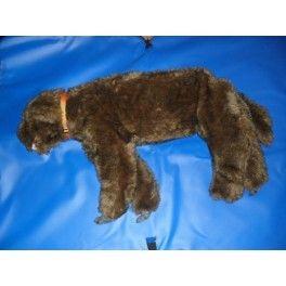 Mannequin chien pour la formation secourisme canin