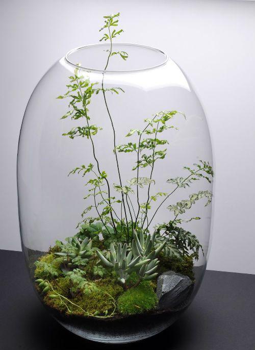 Terrariums : 盆栽的な観葉植物 | wagamamaya