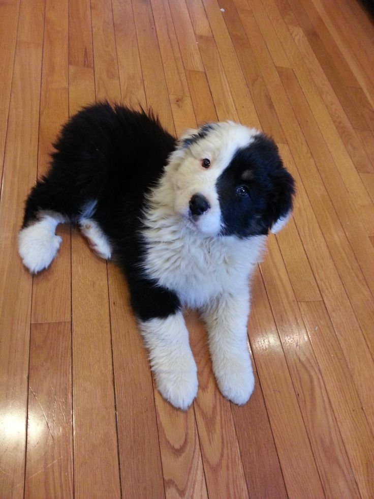 I present to you: Panda the Dog. -D