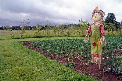 Vegetable garden. Matara Wellbeing gardens