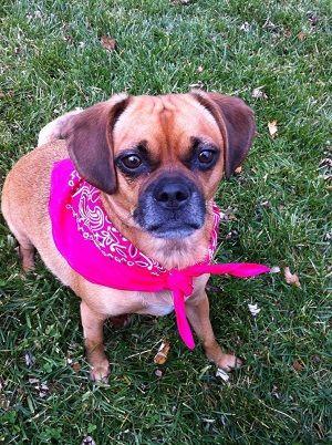 Reduced Fee Pet Adoption Events