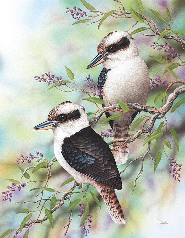 'Australian Kookaburras And Purple Hardenbergia' by Lyn Cooke www.lyncooke.com www.artpublishing.com.au