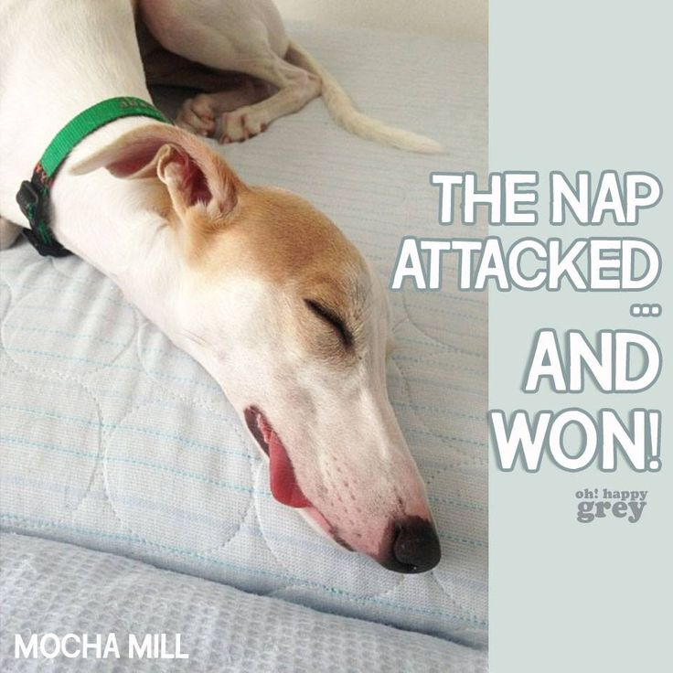 The nap attacked and one - greyhound