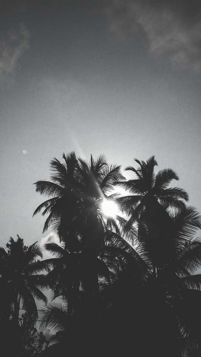 A Black And White Sun Through Palm Trees Black And White Wallpaper Iphone Black Phone Wallpaper Backgrounds Phone Wallpapers