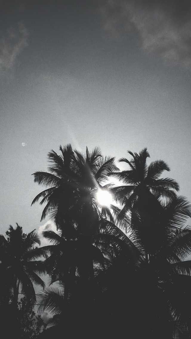 A Black And White Sun Through Palm Trees In 2020 Black White
