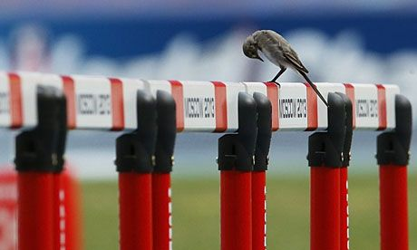 A bird sits on a hurdle in Moscow
