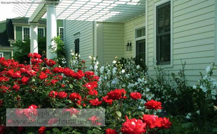 Front Yard Landscaping Roses : Garden and landscaping gardens front yard