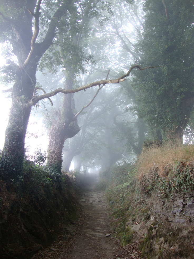 Galician mystic forest