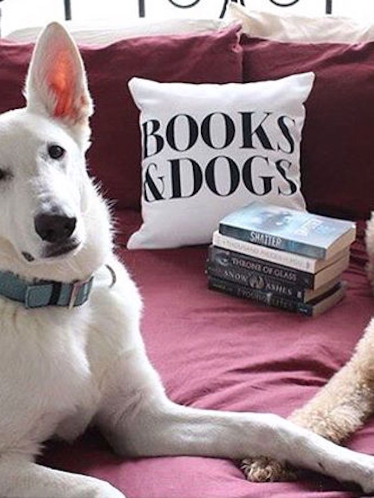 How did three of our favorite things end up all in the same picture? Books, dogs, and Redbubble throw pillows—it's just about all we can ask for in life.