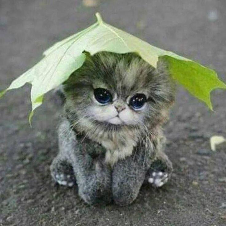 Leaf me a hat. dia dando gracias. X's Mi Chiquita Hermosa te quiero muchisimo my adorable cute gorgeous baby. Besos y abrasos. | Kawaii in 2018 | Pinteres…