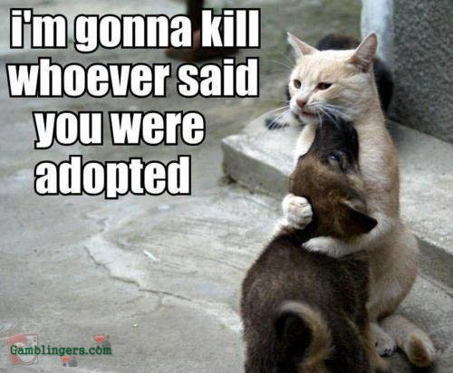 ahhhh..: Dogs Fun, Puppies, Funny Dogs, So Cute, Funny Cat, Funny Pictures, Funnycat, So Sweet, Animal