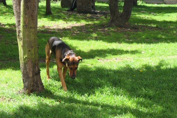 Las heces fecales de las mascotas también tendrán que recogerse de forma obligatoria.