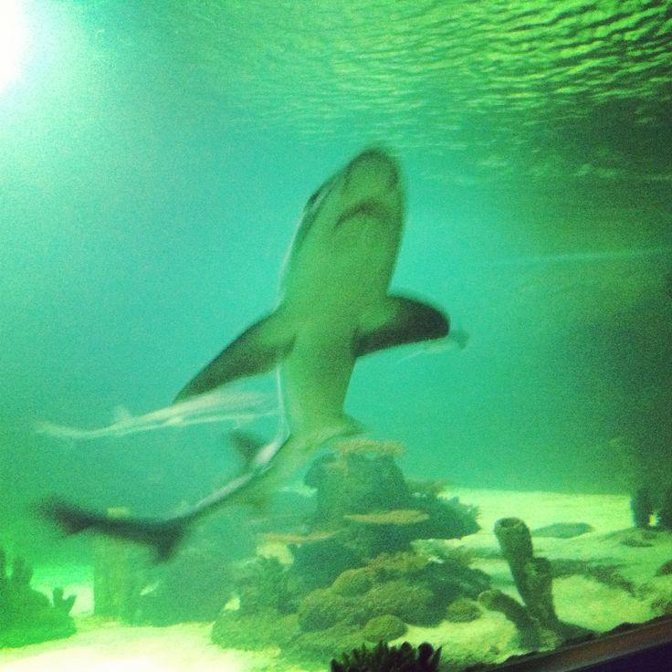 #eskişehir #akvaryum #shark