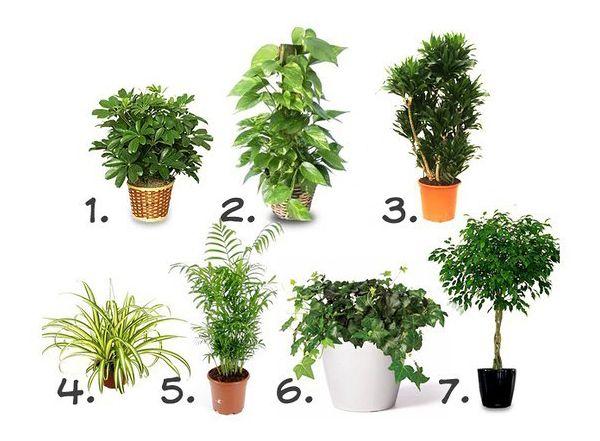 Da li ste znali da je vazduh u stanovima i kućama nekoliko puta zagađeniji nego napolju?http://www.dnevni.rs/magazin/zdravlje/16280-sobne-biljke-za-prociscavanje-vazduha-7-biljaka-za-vase-zdravlje