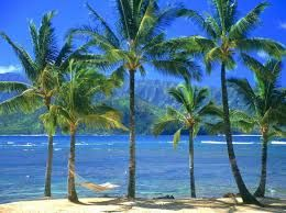 Resultado de imagem para paisajes bonitos de playas del caribe