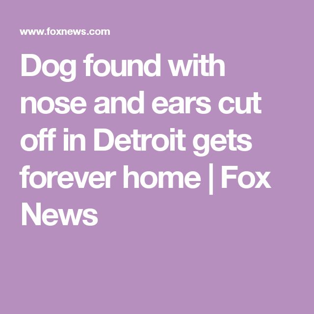 Dog found with nose and ears cut off in Detroit gets forever home | Fox News