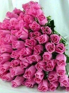 Pink roses #VDay #OliviaGarden #BeautyTools