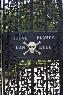Set out TO STEP INSIDE THE POISON #GARDEN IN ENGLAND: Inside the delightful flower fascination of Alnwick Gardens lies The Poison Garden. Behind the bolted entryways is an accumulation of more than 100 of the deadliest plants on the planet, from hemlock and ricin to strychnine: guests are cautioned not to stop and notice the blossoms.