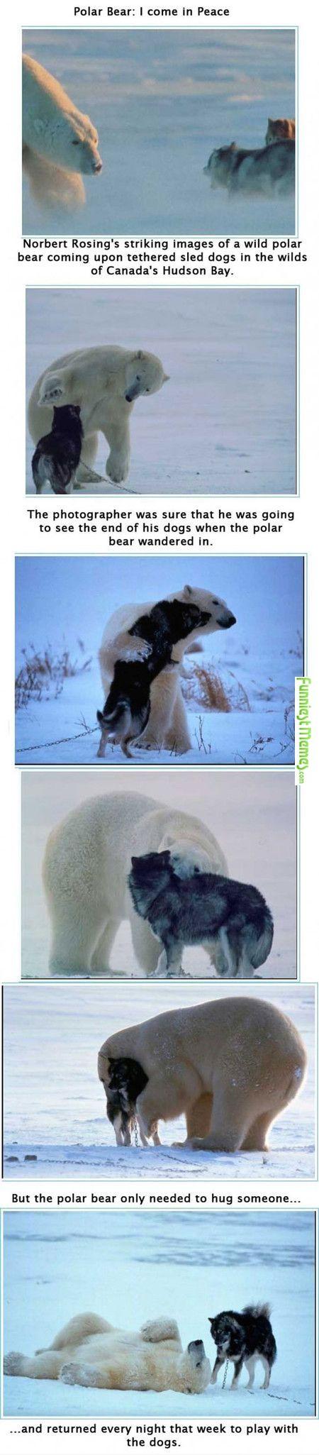 Trending Hug Friendship Ideas On Pinterest Bff Pictures Bff - Guys best friend bear cutest bromance ever