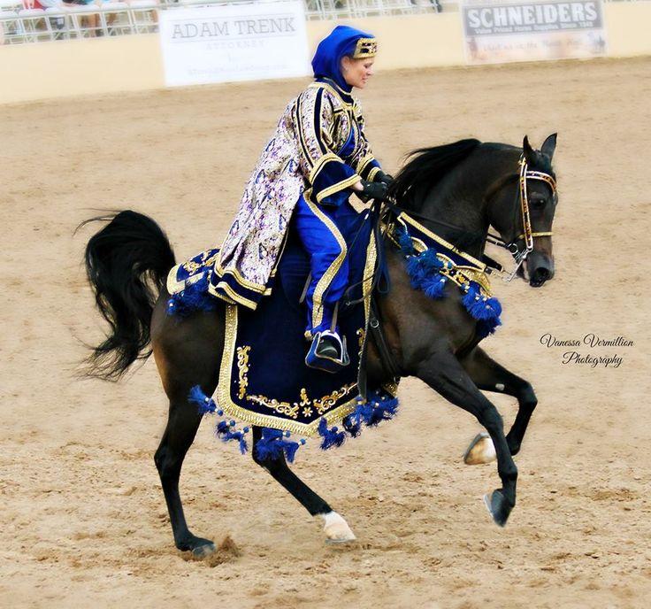 Scottsdale Arabian show February 2014 Photo by Vanessa Vermillion-Meza #ArabianHorses #ShowRing #Scottsdale