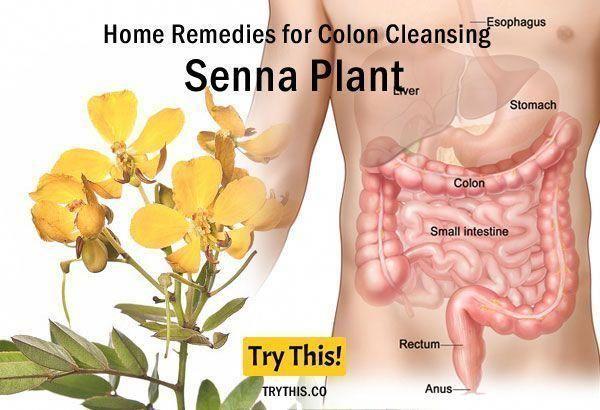 plante detox colon)