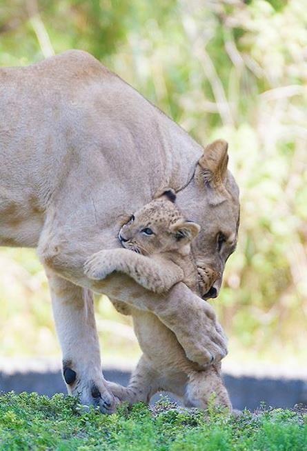 Mother's cute hug