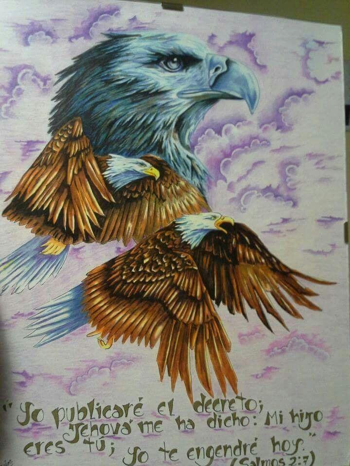 Águilas  a lápiz