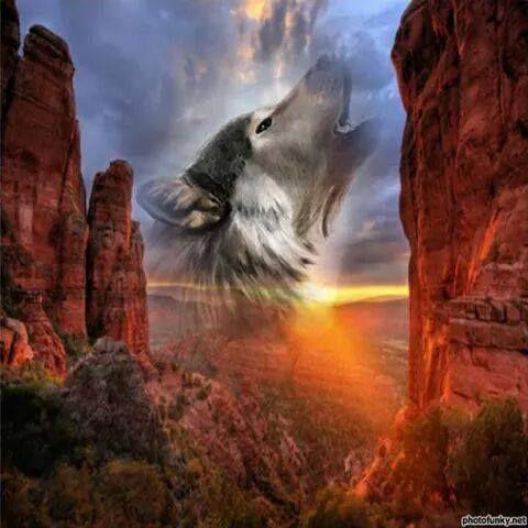 #fantasy #wolf