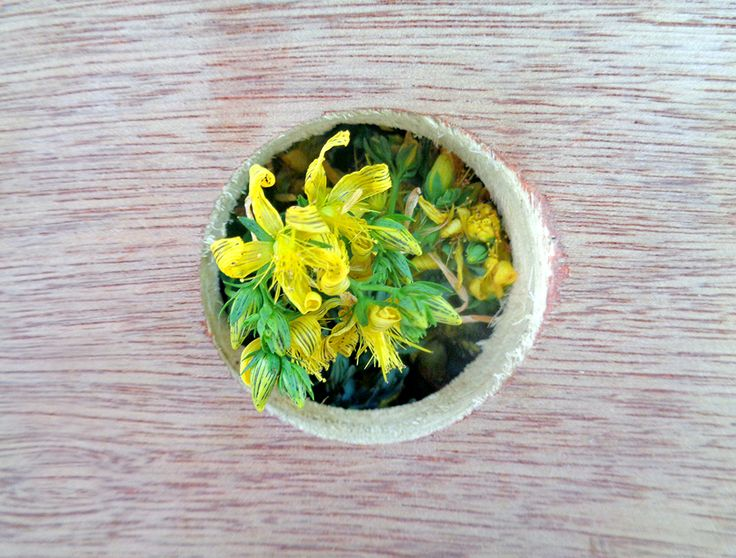 St. John's wort: first batch just arrived from our land.