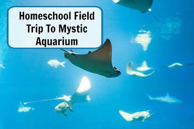 Spending the Day at Mystic Aquarium